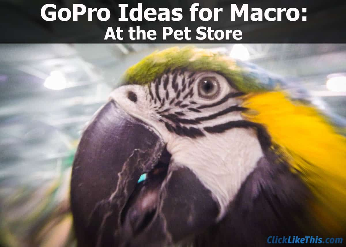 GoPro Macro Macaw at the Pet Store